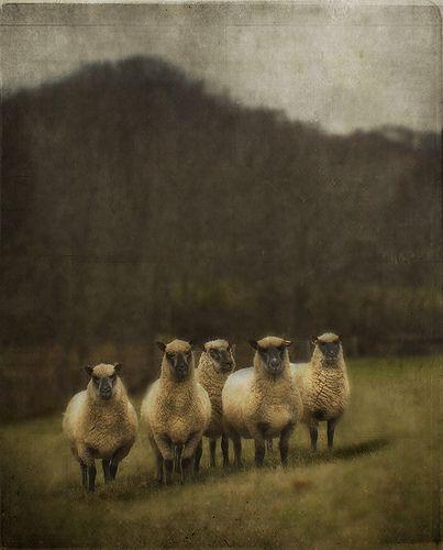 woolly | 相片擁有者 jamie heiden