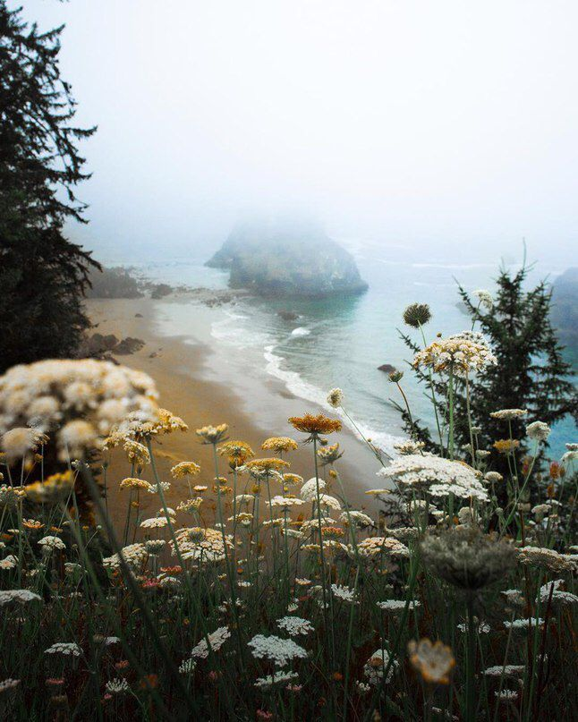 Beautiful Nature Los Angeles: Wildflowers On The Pacific Coast. Pacific Northwest. PNW