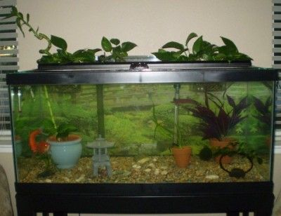 Aquarium Garden