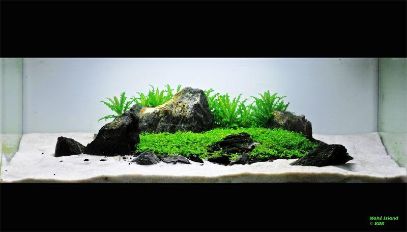 island aquascape - Pesquisa Google | plants | Aquarium ...