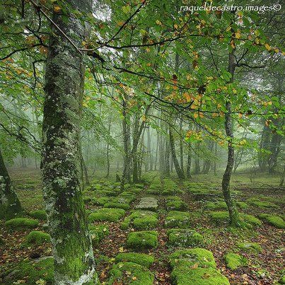 Ancient Road, Basque Country, Spain - Google zoeken
