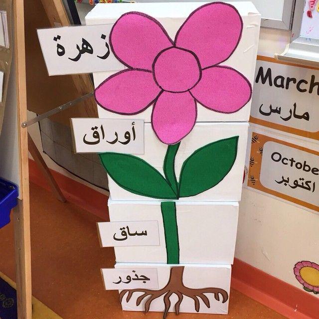 روضتي On Instagram اجزاء النبات يمكن تلصيقها على الاسفنج او ورق مقوى حيث يقوم الطفل بتركيها Preschool Color Crafts Preschool Colors Kids Education