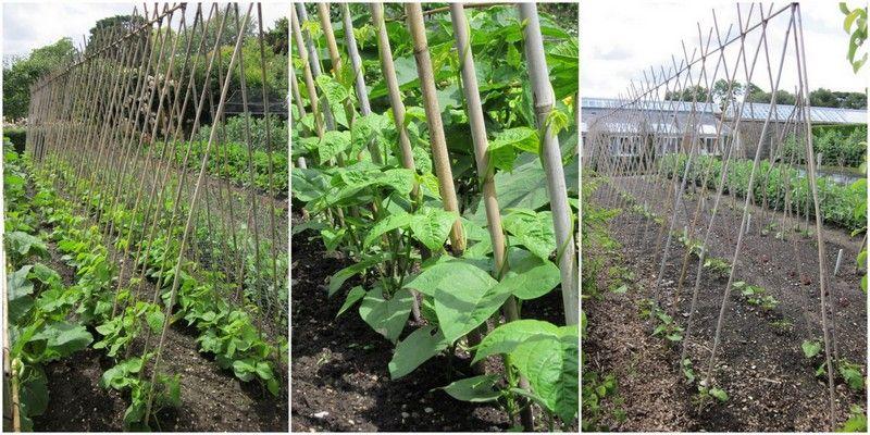 Fin artikel om støtte til afgrøder - bl.a. hindbær og bønner