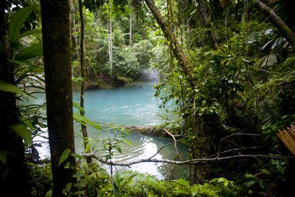 Sacred site in the heart of the daintree rainforest for Australian rainforest