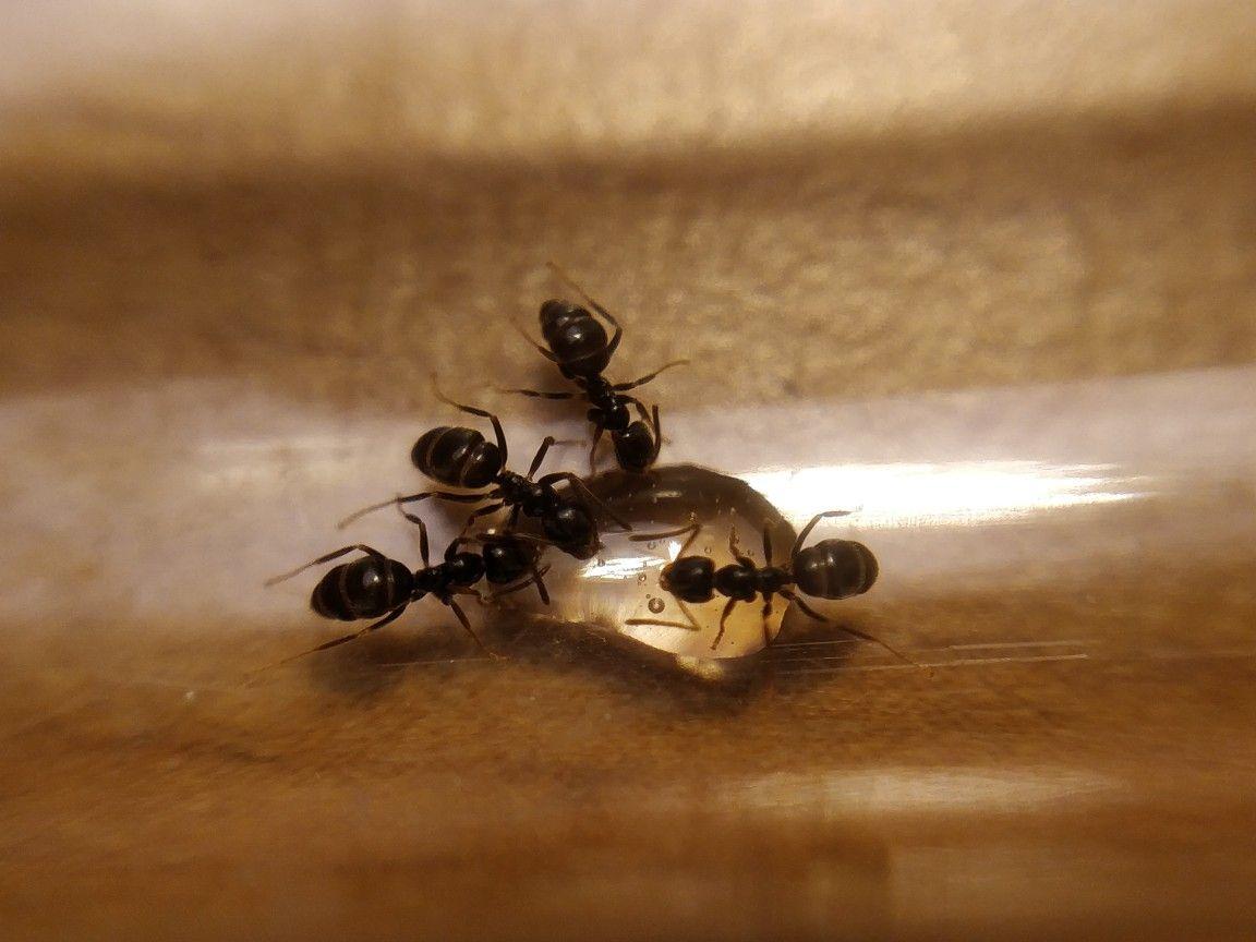 Pin Von Katrin Haus Auf Ameisen Ameisen