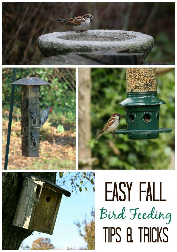 Fall Bird Feeding Tips for Wild Backyard Birds Year Round ...