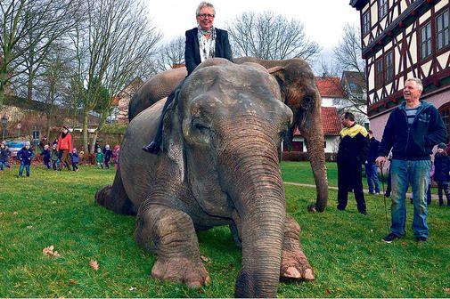 Kritik an Haltung von Zirkus-Elefanten: Schollini-Direktor verteidigt sich
