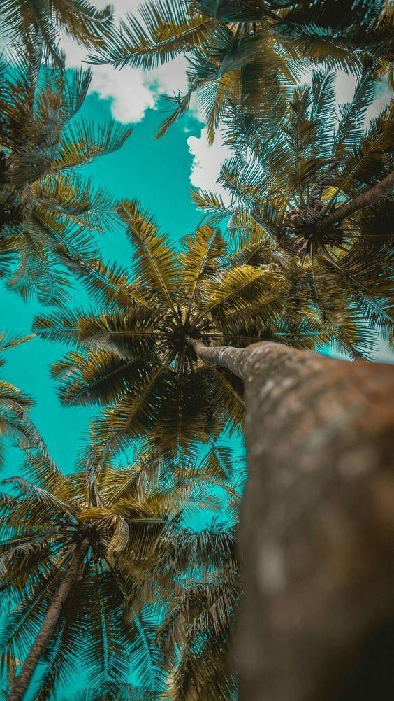 Fondos De Pantalla Iphone Xr En 4k Nuevos Y Originales Tree Wallpaper Iphone Beach Wallpaper Iphone Cloud Wallpaper