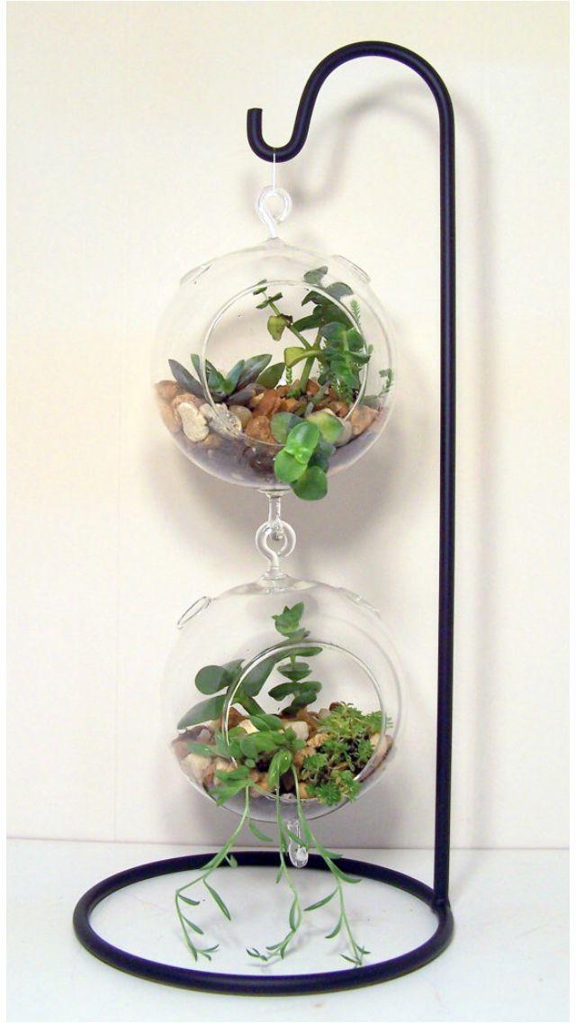 Terrarium Skin Care Pinterest Plants Succulent Terrarium And