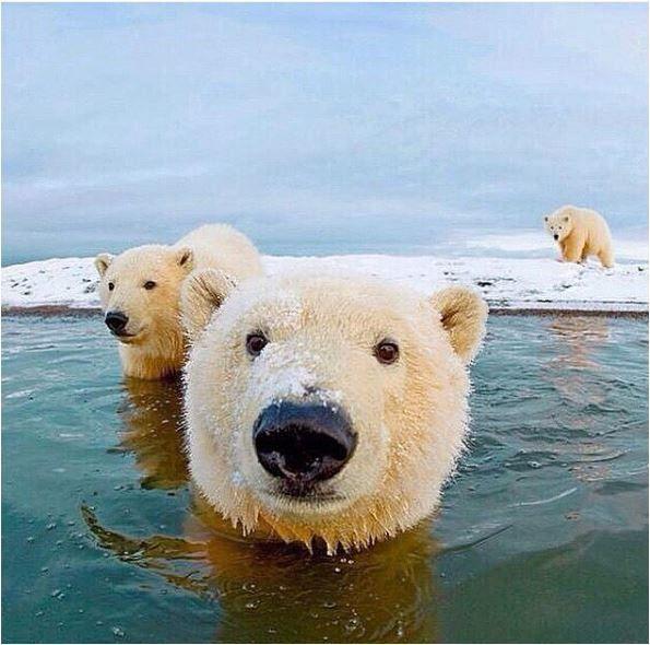 Beautiful Quot Meerestiere Tiere Ausgestopftes Tier