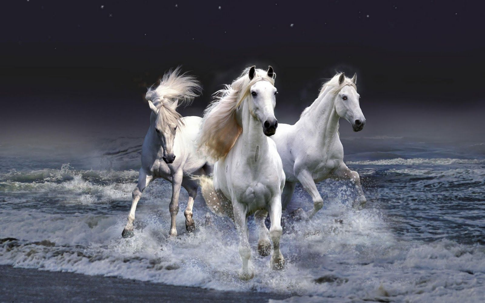 Pin By Ismey Maresch On Beautiful Horses Horse Wallpaper Horses White Horses