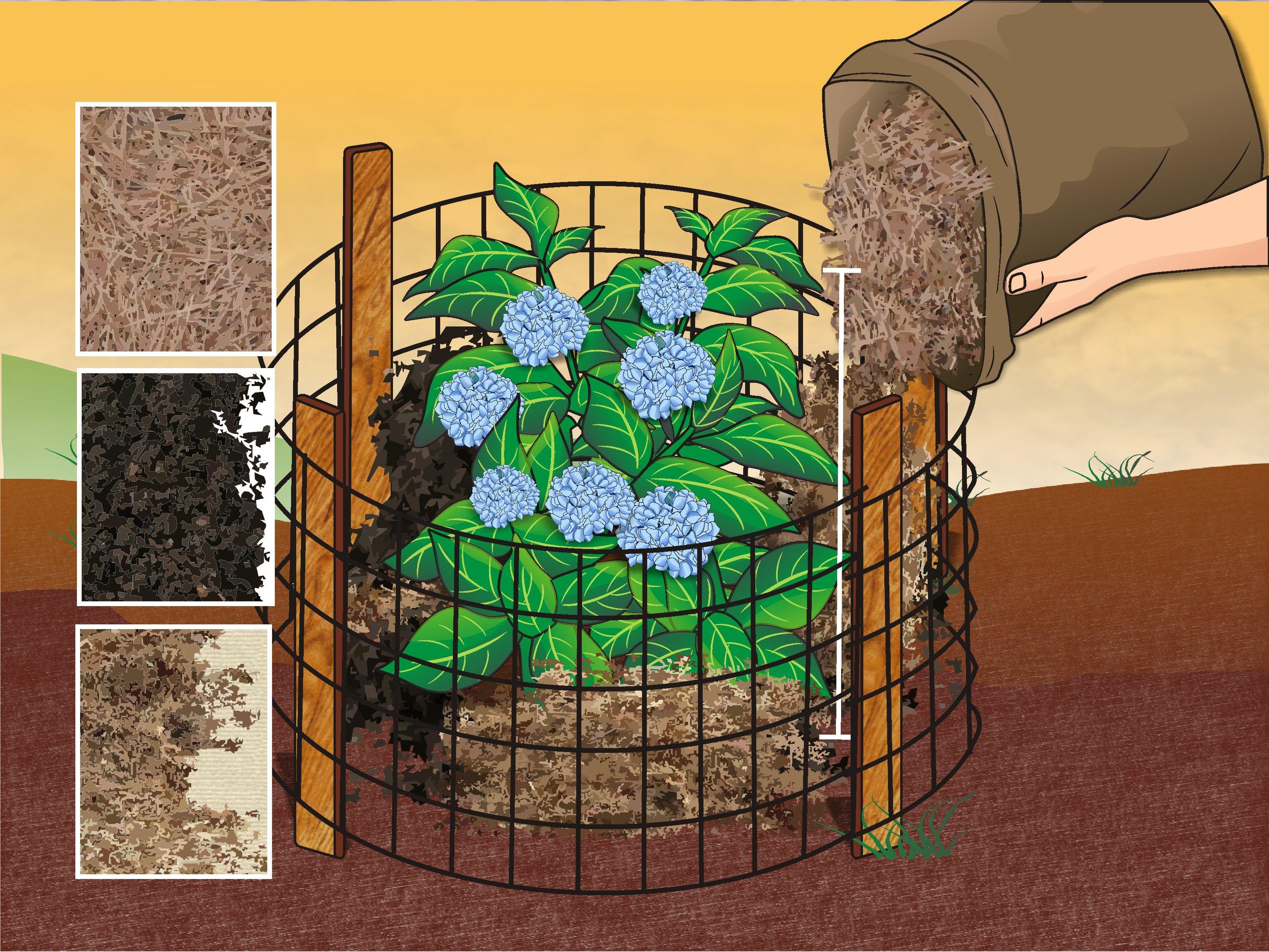 how to prepare hydrangea plants for winter