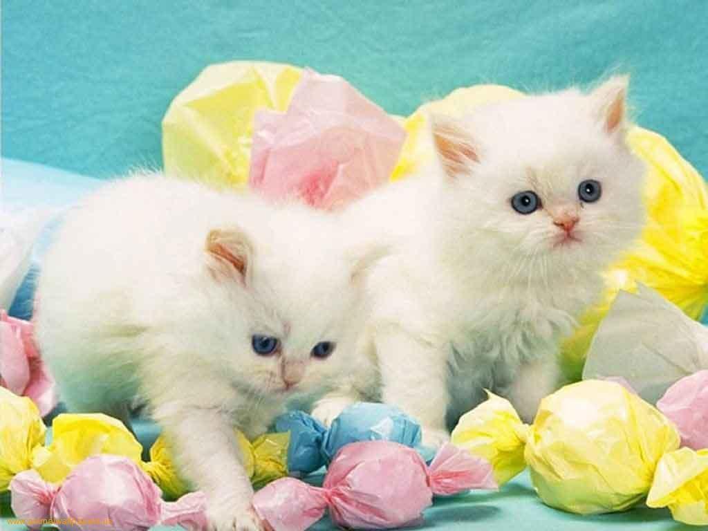 Freeeaterwallpaper Com Download Kittens Wallpaper Two Kittens