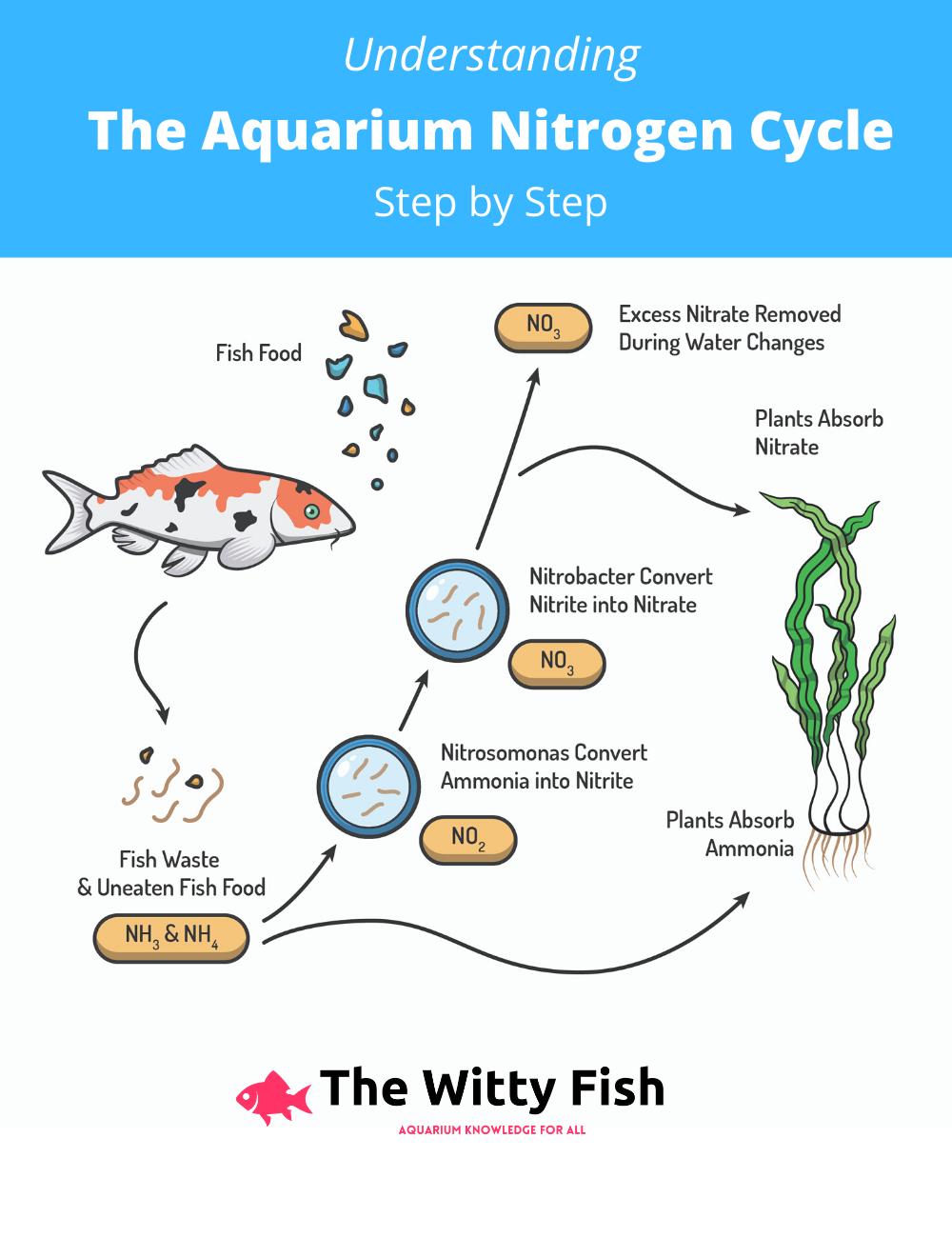 Understanding The Aquarium Nitrogen Cycle | Nitrogen cycle ...