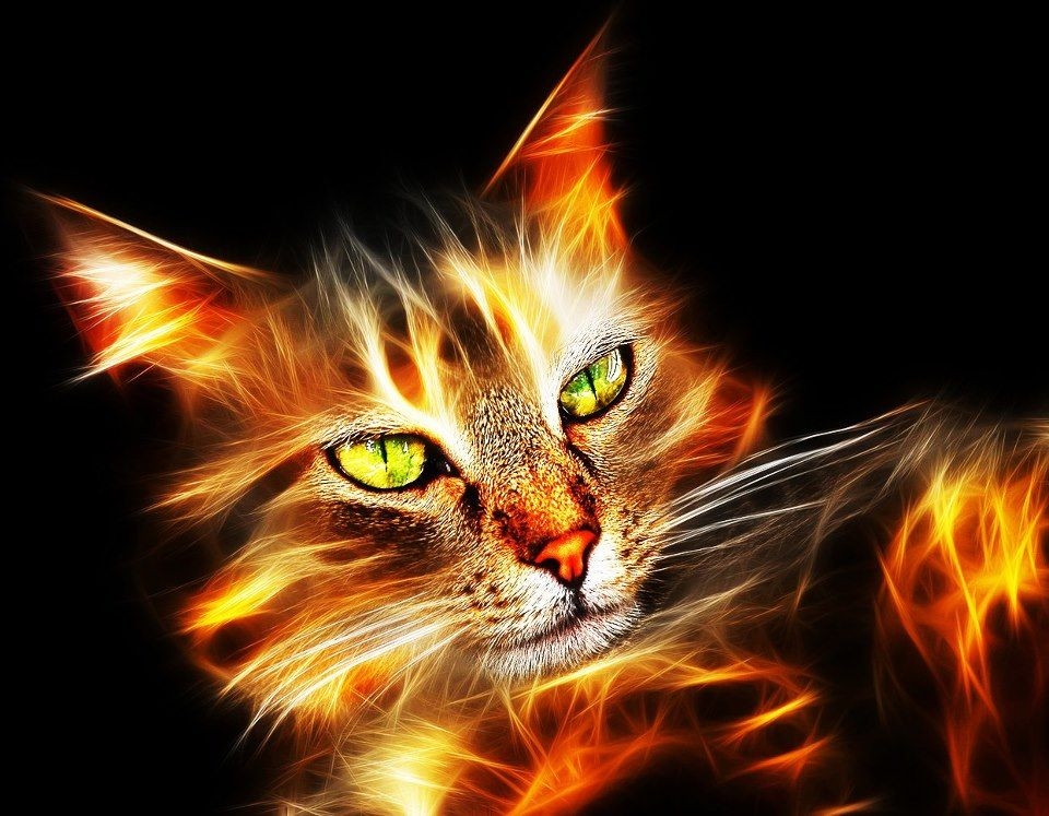 Fantasy cat Neon cat, Beautiful cats, Cat art