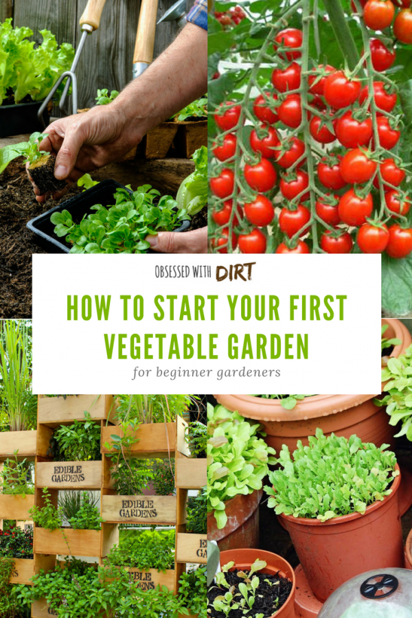 I Love This Beginner Vegetable Gardening Guide Absolutely