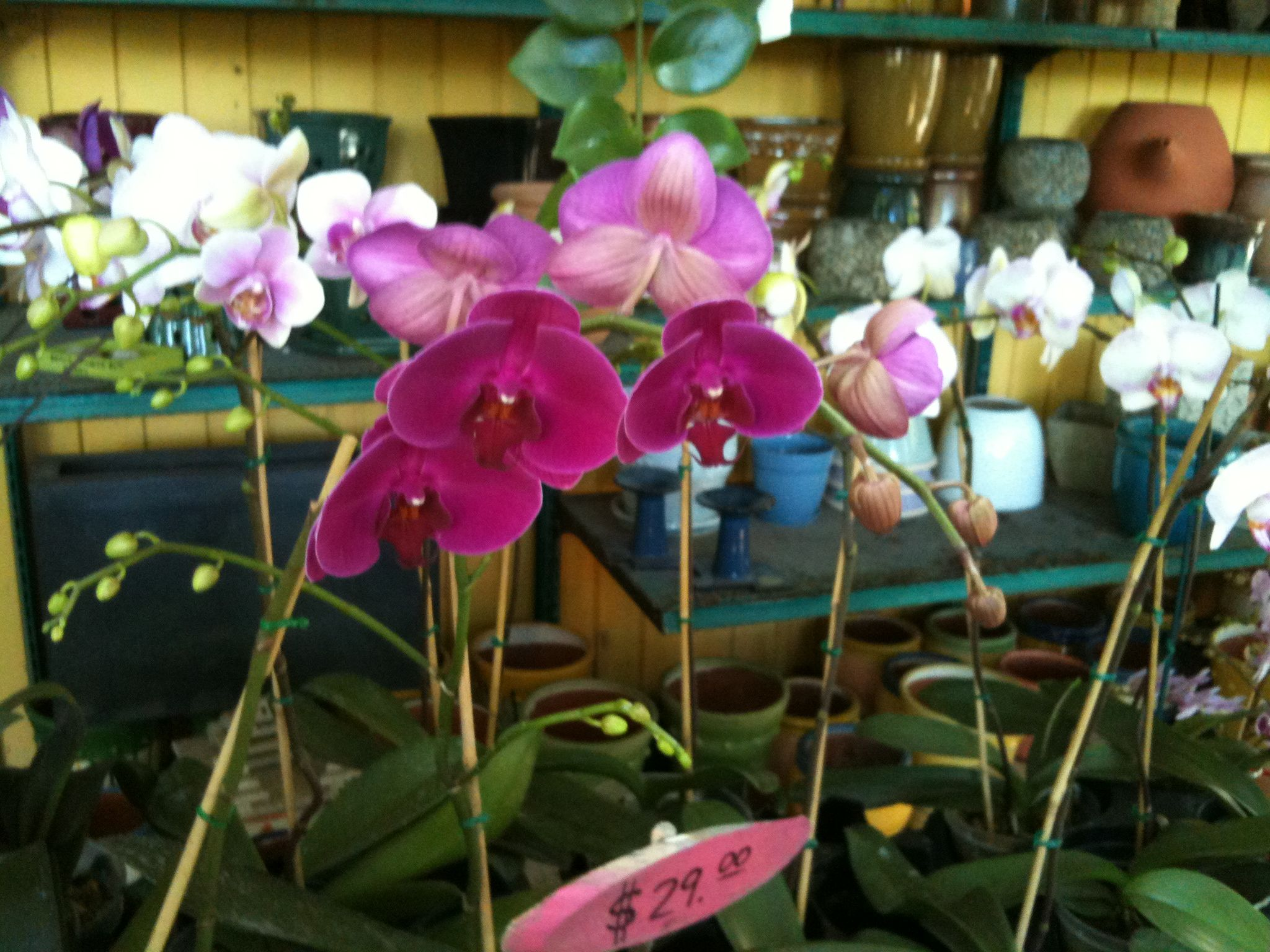 Photo of Orchids I took in Key West, Florida. Trees to