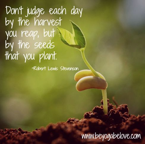 What Seeds Are You Planting?