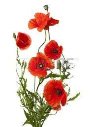 """Résultat de recherche d'images pour """"dessin bouquet fleurs des champs""""   Bouquet de fleurs ..."""