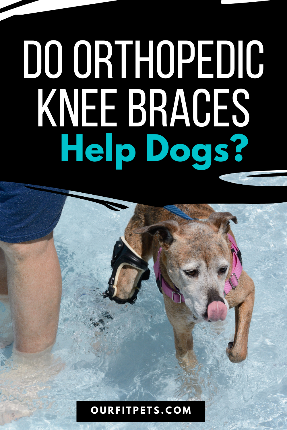 Do Orthopedic Knee Braces Help Dogs Our Fit Pets In 2020 Cat Advice Orthopedics Cruciate Ligament