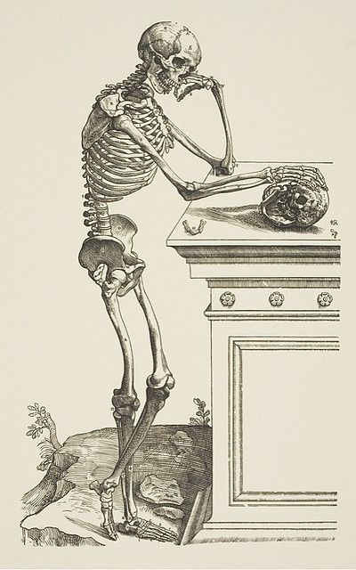 Andreas Vesalius (1514–1564), Skeleton Contemplating a Skull from De Humani Corporis Fabrica, 1543