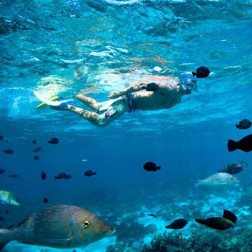 Coral Bay, Ningaloo Reef, Western Australia   (image from Tourism Australia)  #snorkling