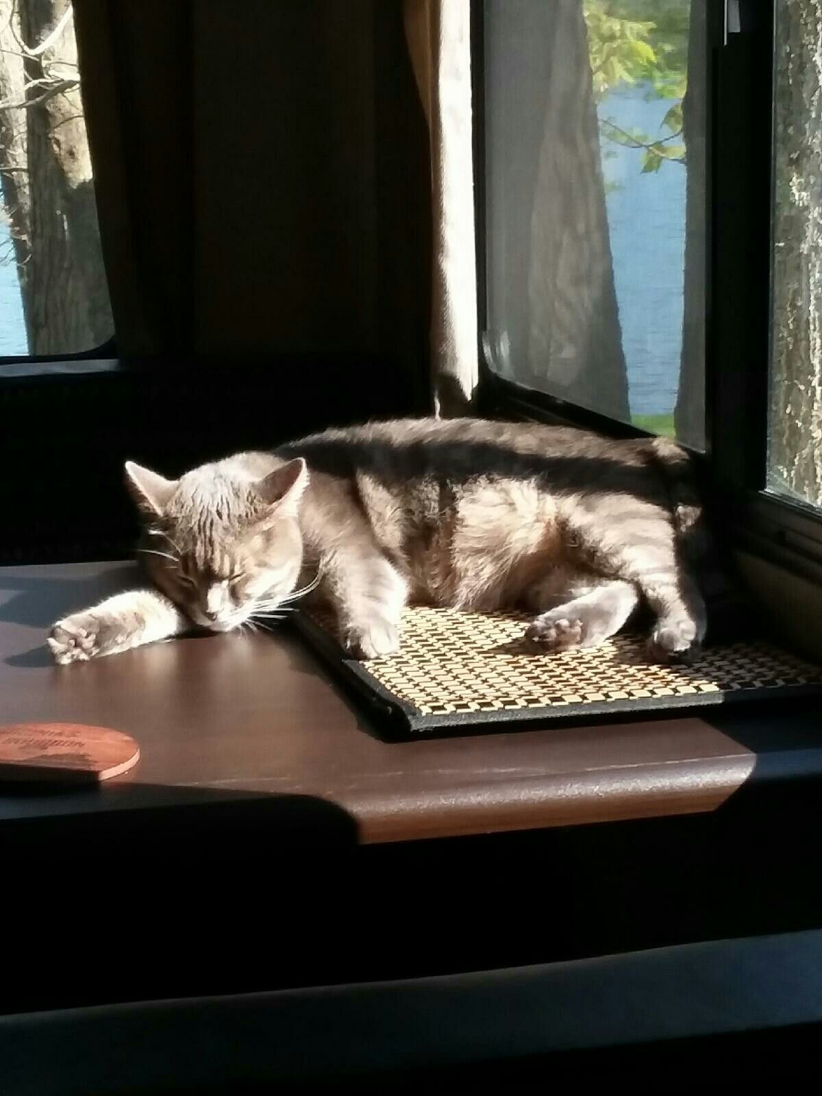 Pin by Lance Cardaro on Our Camper Kitty Kitty, Cats