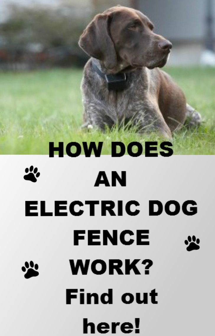 Learn How An Underground Dog Fence Works And Check Out In Depth Reviews On Many Top Electric Dog Fences Dog Fence Front Yard Fence Modern Fence