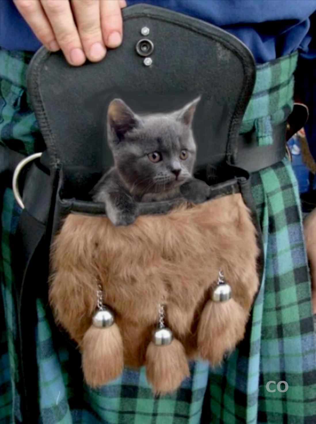 05 25 19 A Manipulated Photo Of Adso Bear In A Sporran By Co Outlander Novel Outlander Outlander Show