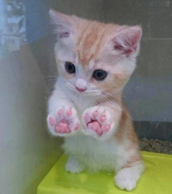 Las fotos más curiosas que solo los amantes de los gatos adorarán