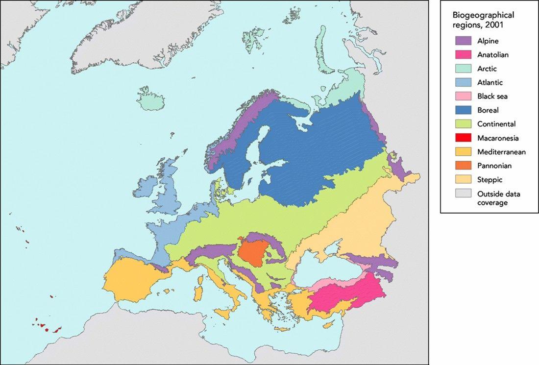 En el norte del continente domina la tundra compuesta - Plantas resistentes al frio ...