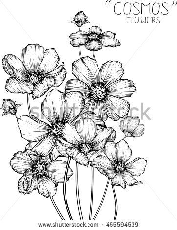 Cosmos Flowers Clip Art Or Illustration Flower Pattern Drawing Flower Sketches Flower Drawing