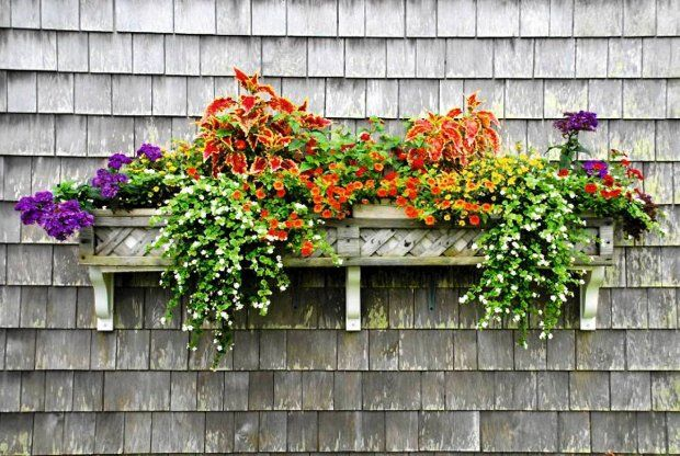 Zdjecie Nr 3 W Galerii Harmonijne Mozaikowe Teczowe Zestawy Kwiatow W Skrzynkach Balkonowych Balcony Flower Box Window Box Plants Flower Boxes