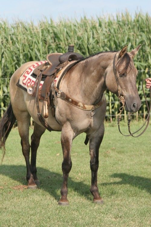 Pin On Western Ranch Charro Quarter Horses Cowboy Cowgirl