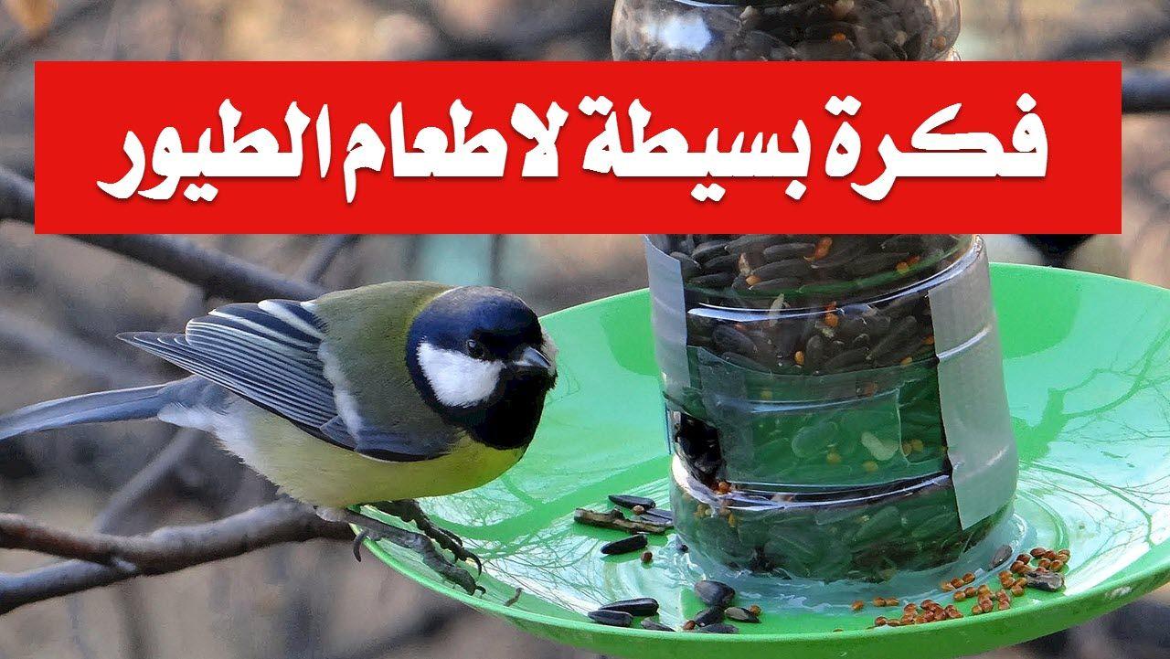 فكرة بسيطة لاطعام الطيور Animals