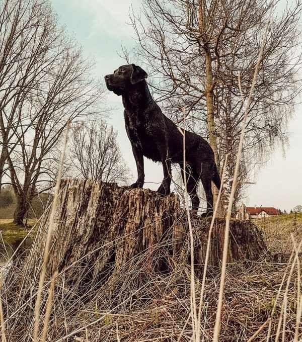 Dein Hund Jagd So Funktioniert Anti Jagd Training Wirklich Hunde Jagd Hundetraining