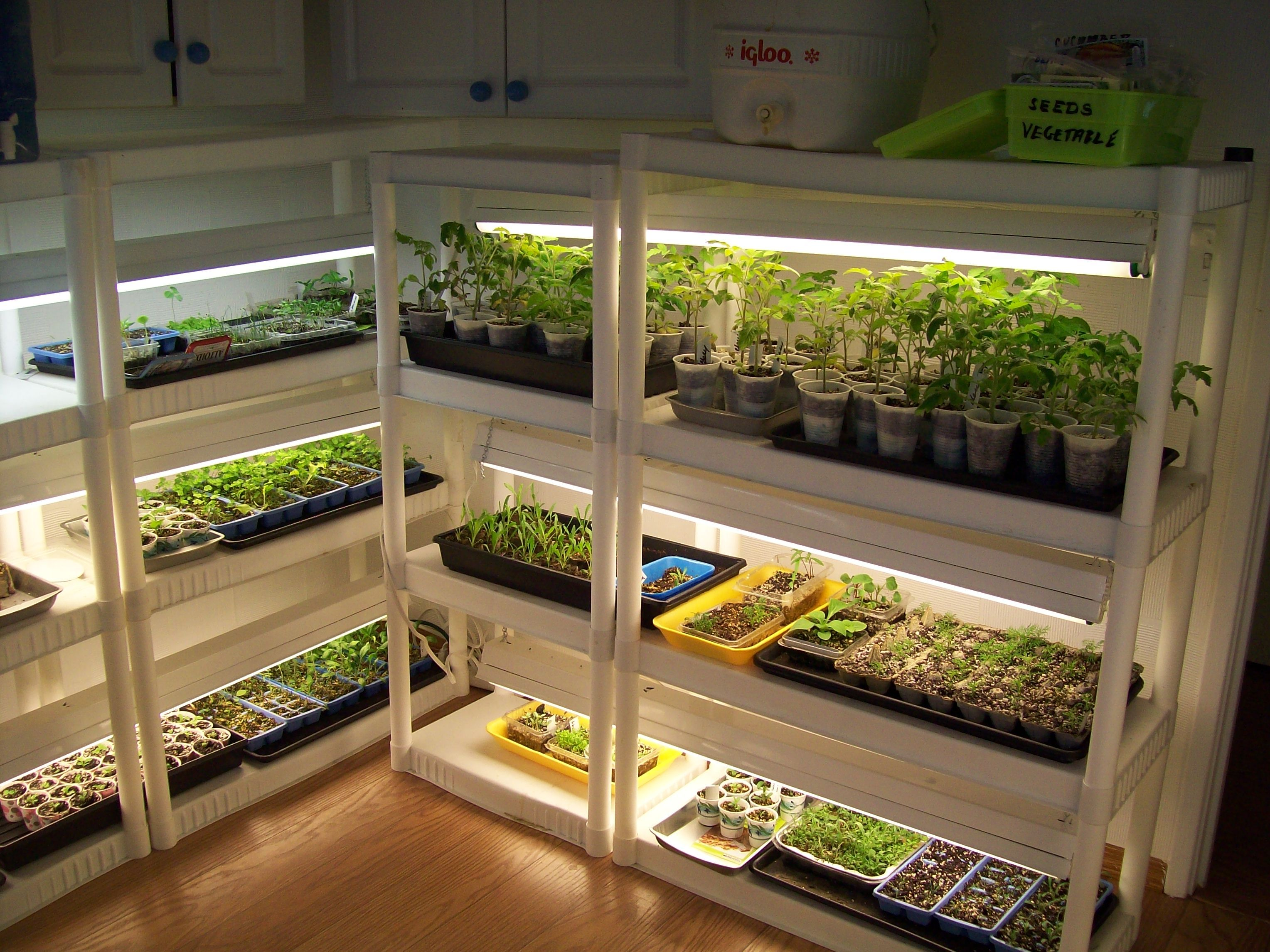 cheap snap together shelves and shop lights make for a reasonable indoor greenhouse and you can. Black Bedroom Furniture Sets. Home Design Ideas