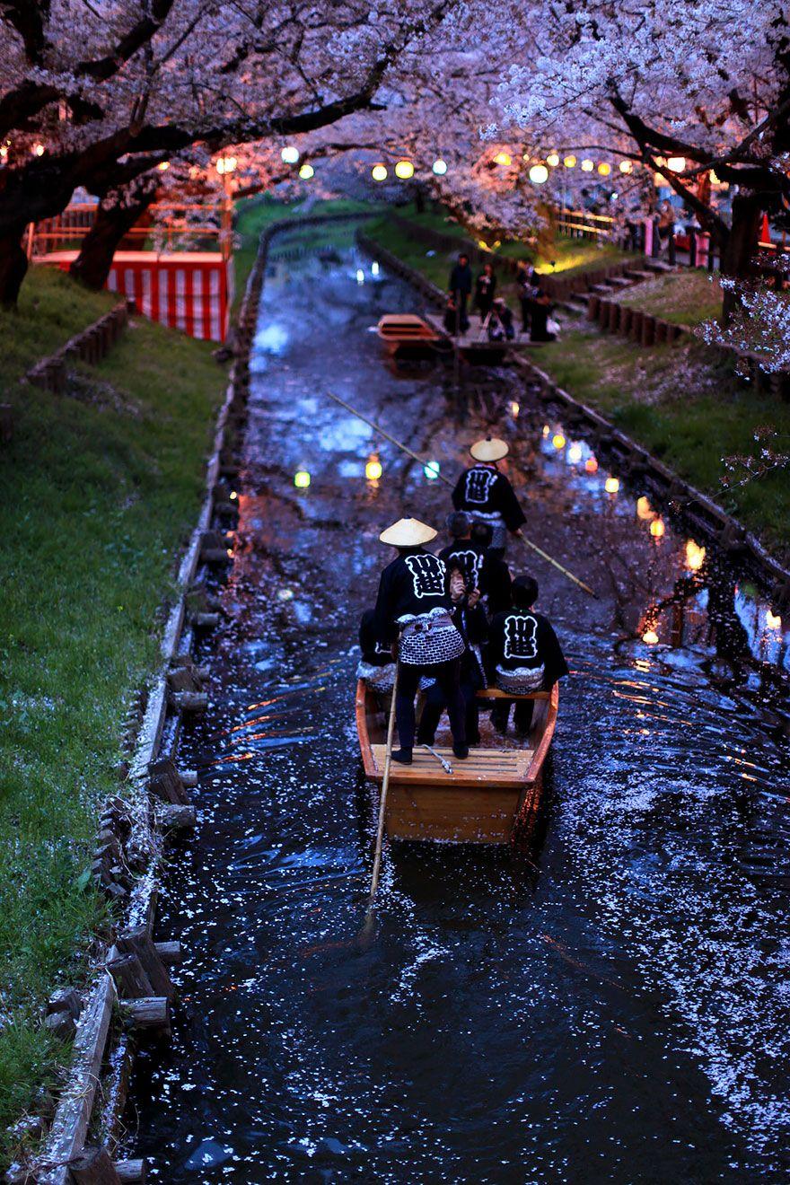 Cherry Blossom Boat Ride Japan travel, Visit japan