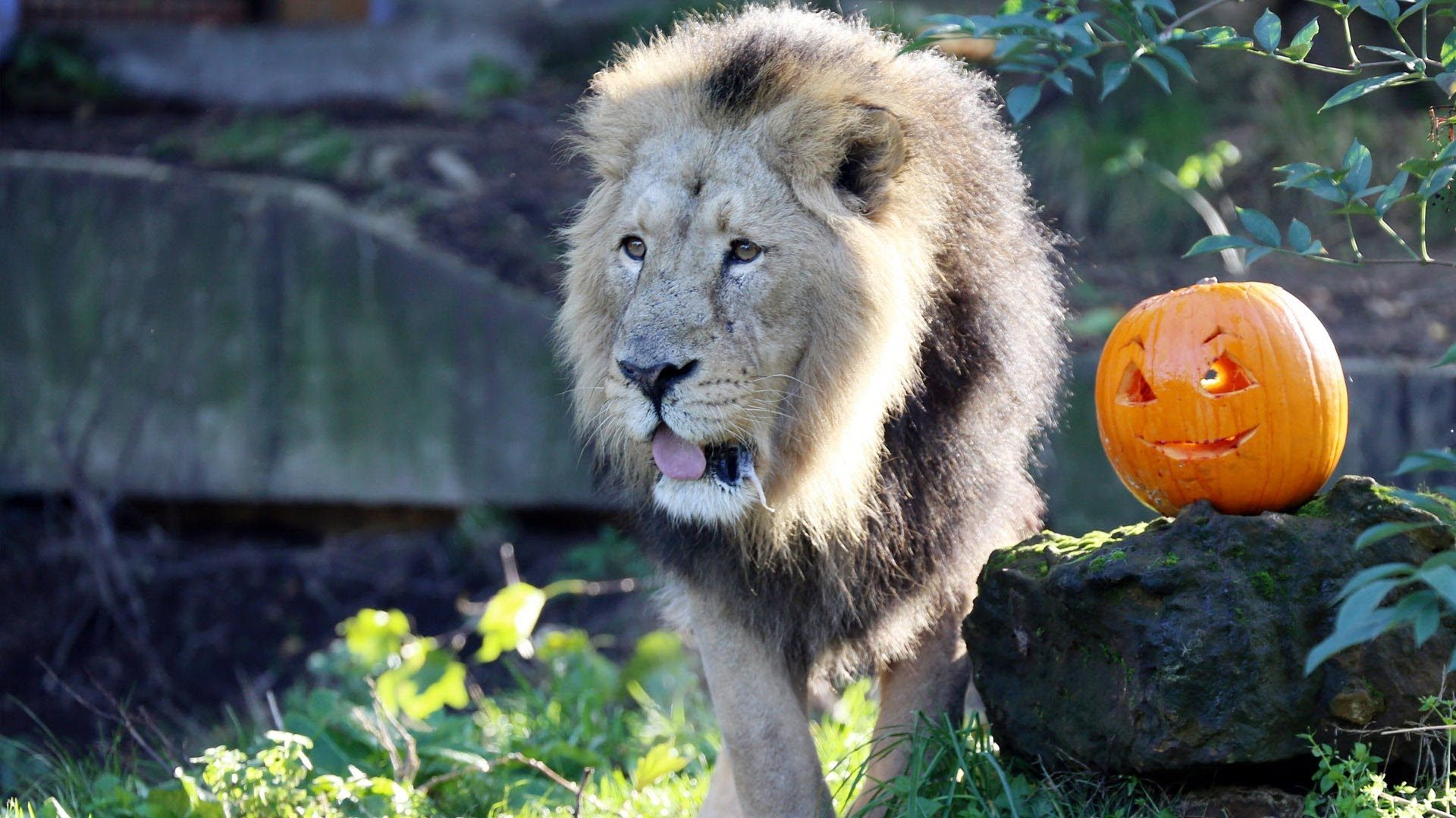 Animals celebrate Halloween at ZSL London Zoo Wild