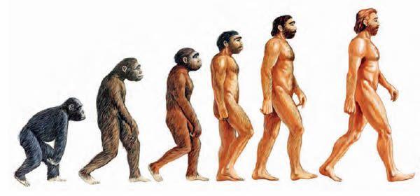 Raras Evidencias de la evolución en partes del cuerpo humano