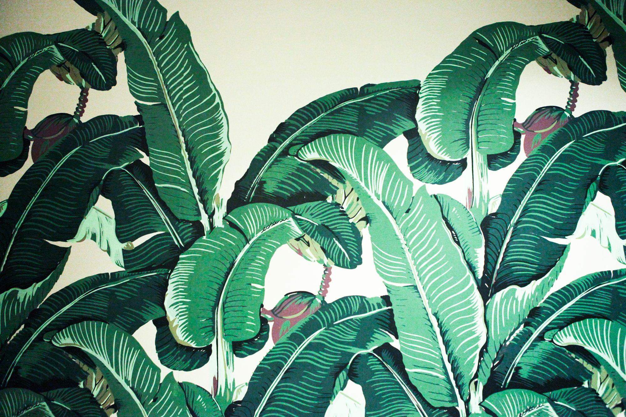Palm Leaves Desktop Wallpaper Find the best tropical beach wallpaper desktop on wallpapertag. palm leaves desktop wallpaper