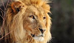 Sede sóbrios; vigiai; porque o diabo, vosso adversário, anda em derredor, bramando como leão, buscando a quem possa tragar; 1 Pedro 5:8