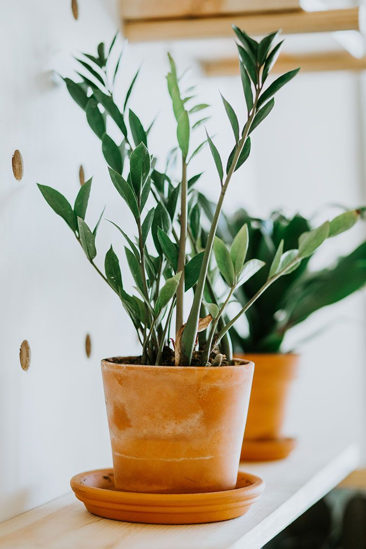 My 5 Favorite Low Light House Plants + How To Care for Them| Jojotastic