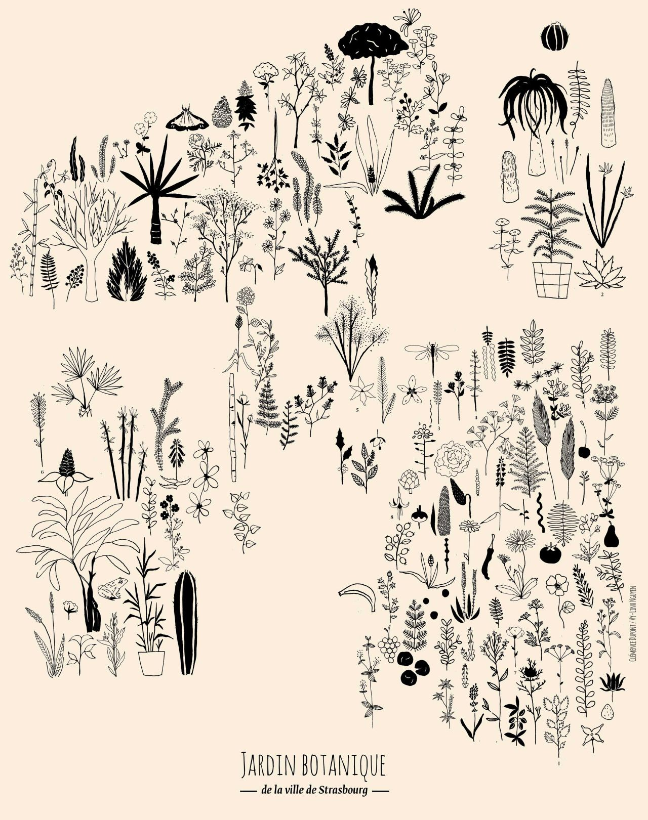 Clémence Dupont Vy Linh Nguyen Jardin Botanique de la ville de