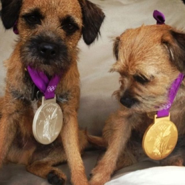 Border terrier gold medal Olympic champs