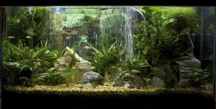 7 decor ideas for 30 gallon tank aquariums pinterest for Aquarium decoration ideas freshwater