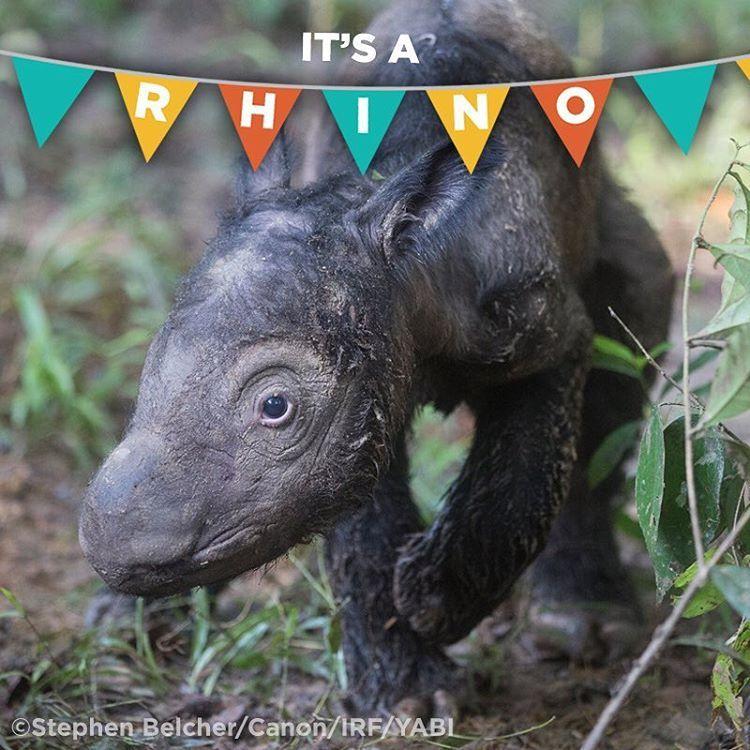 Instagram With Images Sumatran Rhino Rare Animals