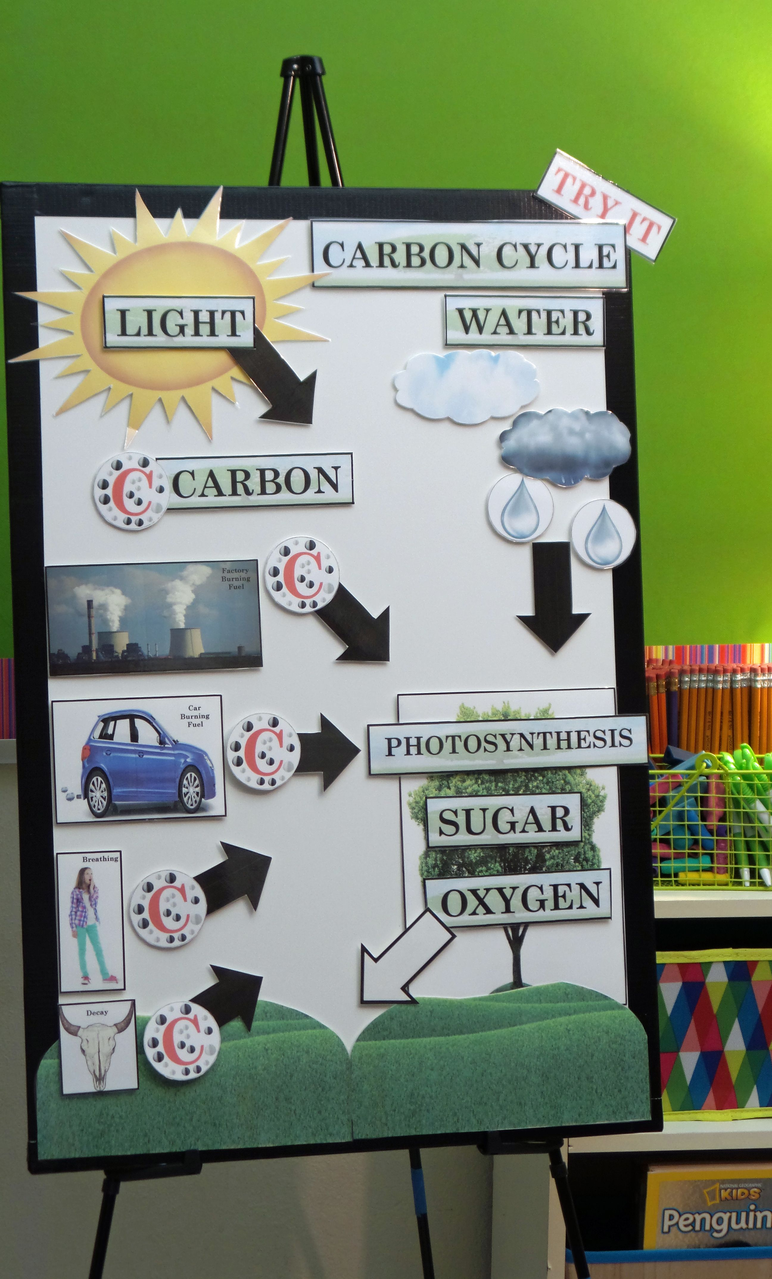 Active Anchor Chart Carbon Cycle