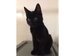 Urgently Looking For Temporary Home For Kitten Chico Lewisham
