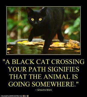 End the myth about Black Cats!